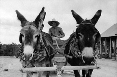 to locate this image on the American Memory website use search terms BURRO and CART