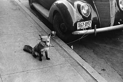 to locate this image on the American Memory website use search terms FOX and AUTOMOBILE